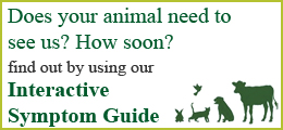 Eden Veterinary Practice-Interactive Symptom Guide