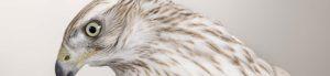 Eden Veterinary Practice-About