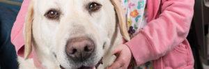 Eden Veterinary-Pets